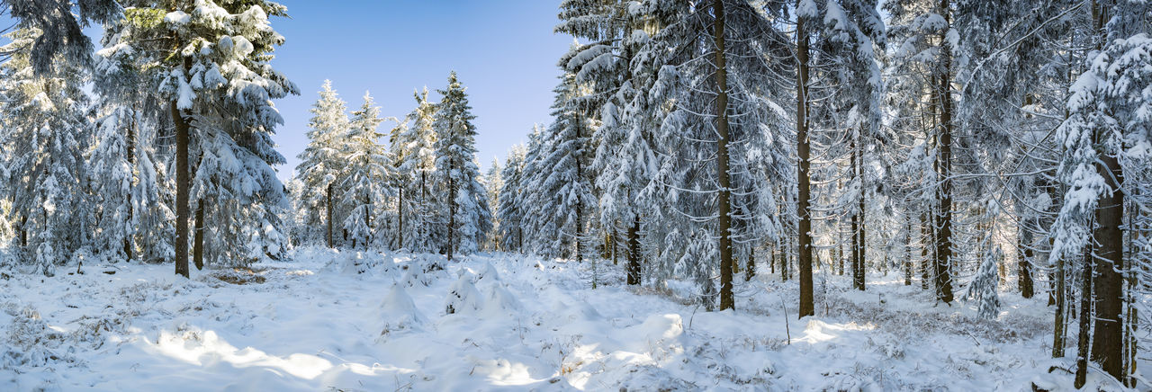 a wintry forest early in the morning Nature Winter Background, Beautiful, Blue, Christmas, Cold, Forest, Frost, Frozen, Ice, Landscape, Leaves, Mountain, Nature, Outdoor, Outdoors, Park, Season, Snow, Snowy, Sun, Sunlight, Sunshine, Tree, Trees, White, Winter, Woods Forest Snow Sun