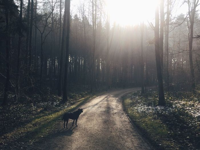 Dog Standing On Road In Forest