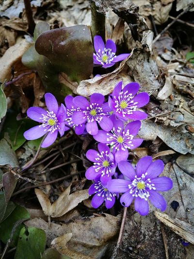 Flower Petal Flower Head Purple Fragility Freshness Beauty In Nature Nature Plant Growth No People Blooming Outdoors Day Water Close-up