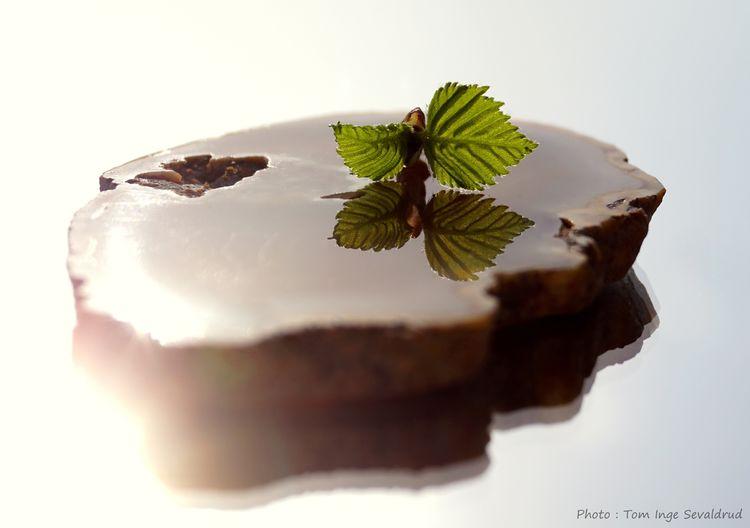 Creativephoto Photoart Agate Leaf No People Plant Plant Part Close-up Nature First Eyeem Photo