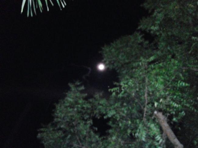 Moon Night Moonlight Outdoors Tree Nature Beauty In Nature No People nightsky