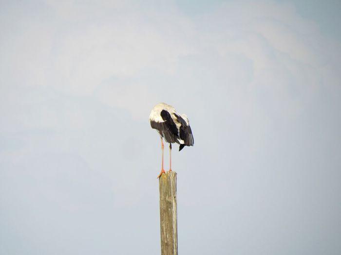 EyeEm Selects Bird Full Length Wooden Post Wood - Material Sky