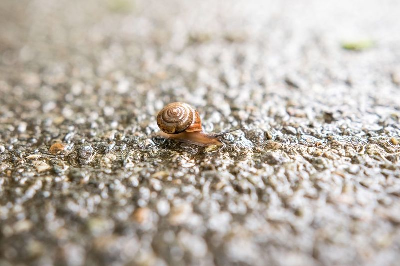 Selective Focus Animal Themes Wildlife Animals In The Wild Animal Shell Snail Wet Nature Outdoors Zoology Day Beauty In Nature Fragility No People Gastropod