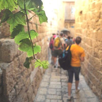 In the old city of Jaffa, Israel (a couple years ago) #igdaily #bestagram #instaaaaah #jj_forum #jj #israel #jaffa #igersisrael #travel #leafs #vine #path #people #foliage #primeshots #instagramhub Leafs Travel Path Foliage Israel Jaffa IGDaily Jj  Bestagram Instaaaaah Instagramhub Vine Jj_forum Primeshots Igersisrael People