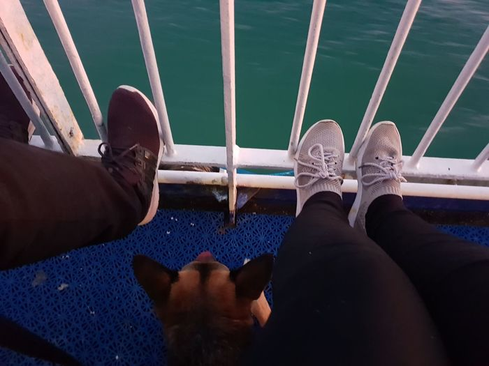 Low section of couple with dog sitting in boat