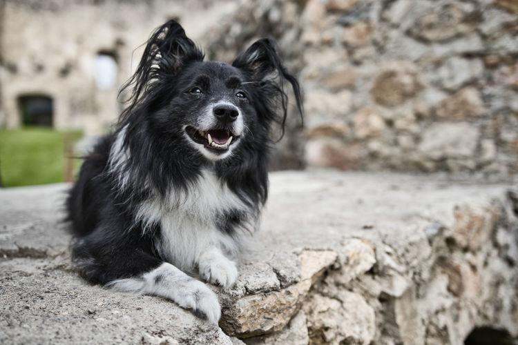 Portrait of black dog sitting on rock