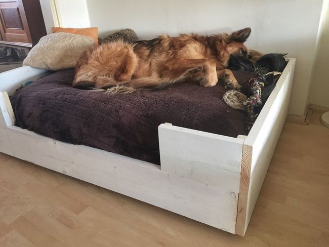 Nieuwe bed is goedgekeurd 😄 Pets Domestic Animals Lying Down Relaxation One Animal Home Interior Dog Bed Ilovemydog German Shepherd