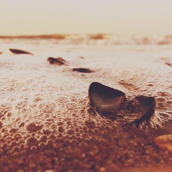 Mossel Moules Sea Shell Northsea Beach Iphone 6 Plus