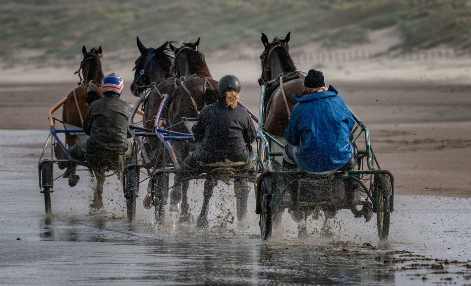 Running horses on the beach, Wijk aan Zee Horses Netherlands Training Day Beach Group Of Animals Holland Horse Livestock Outdoor Outdoors Real People Running Horses Speed Transportation Working Animal Stable Shore Horse Cart Sand Sandy Beach