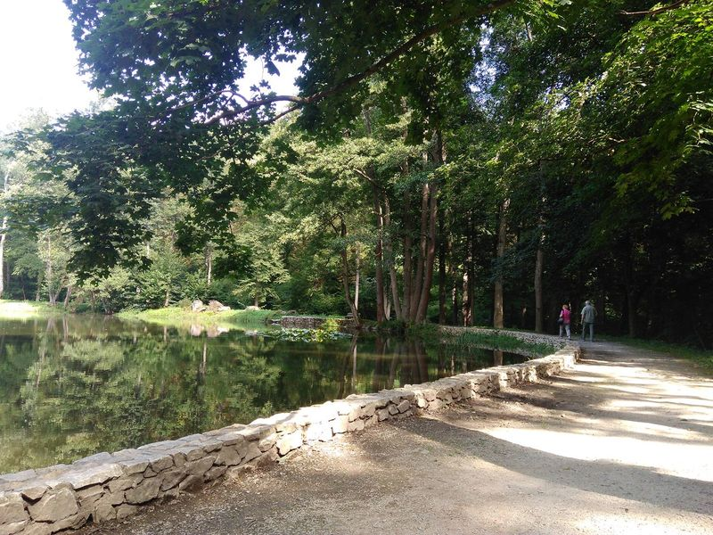 Nature Photography Forestwalk Lake View Water Reflections Old People Walking Around Trees Happy People Happy Old People Sunlight Summer ☀