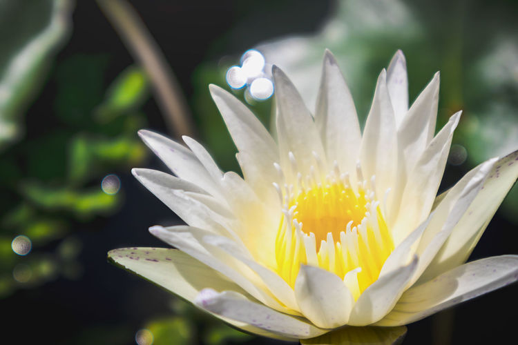 Lo Flower