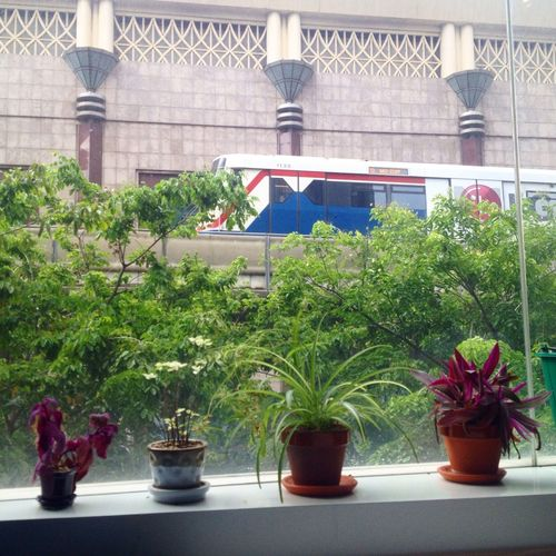 Green Color bts Day scenery Potted Plant Growth Building Exterior transportation