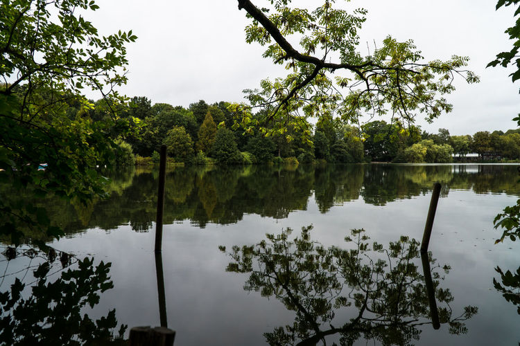 Tree Plant Reflection Lake Water Tranquility Beauty In Nature Growth Sky Tranquil Scene Scenics - Nature Nature No People Green Color Day Waterfront Non-urban Scene Outdoors Idyllic Reflection Lake Symmetry Beauty In Nature