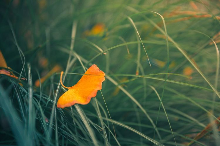 Beauty In Nature Close-up Field Growth Leaf Nature No People Orange Color