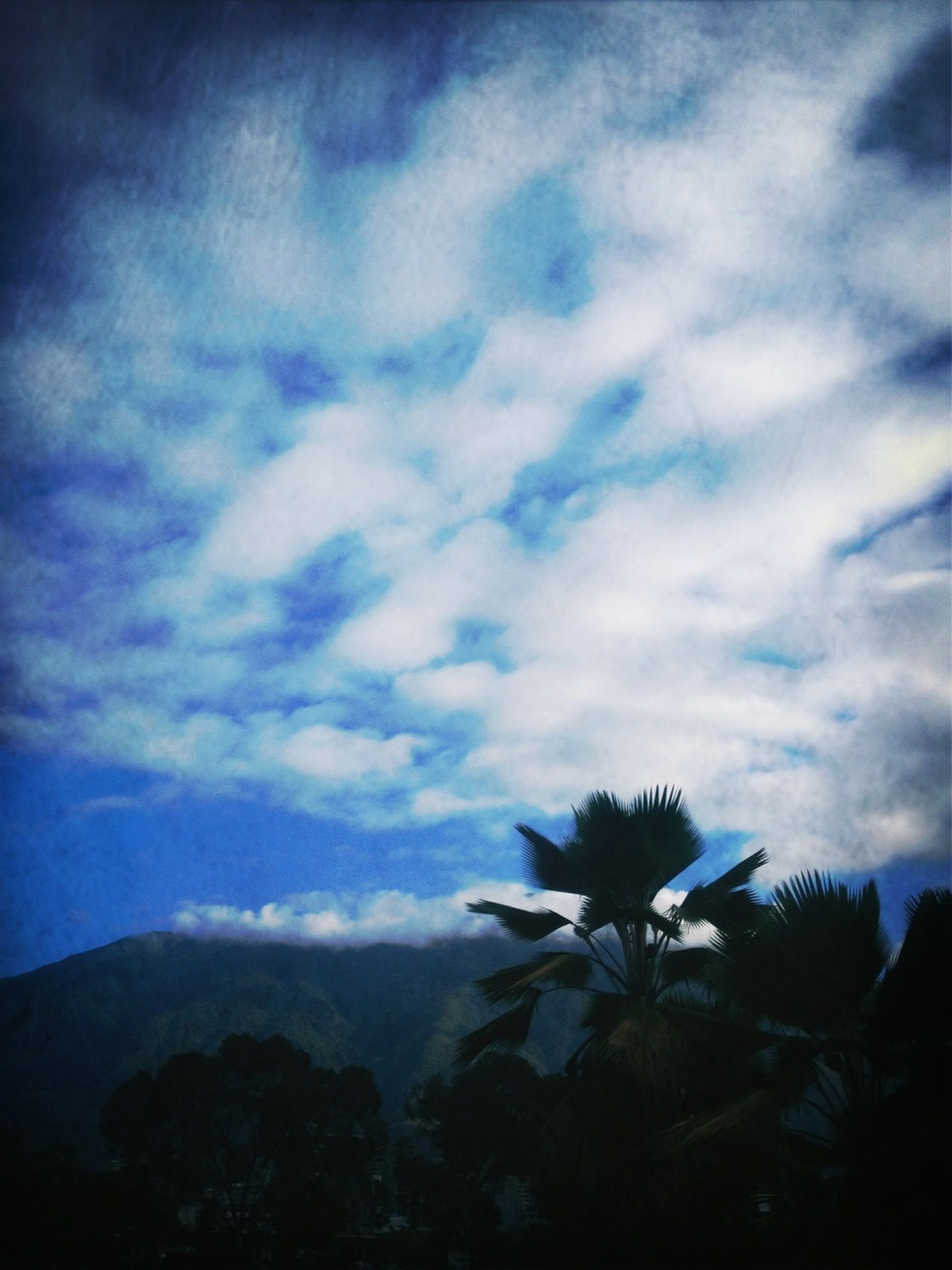 sky, beauty in nature, cloud - sky, tranquility, nature, tranquil scene, scenics, mountain, low angle view, growth, cloudy, cloud, tree, silhouette, outdoors, blue, mountain range, no people, plant, day