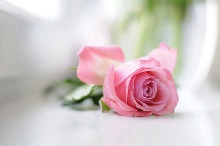 Pretty flower ♥ Pink Rose Pretty Rose  Flowers Pink Check This Out MyfirstEyemphoto Nice! First Eyeem Photo