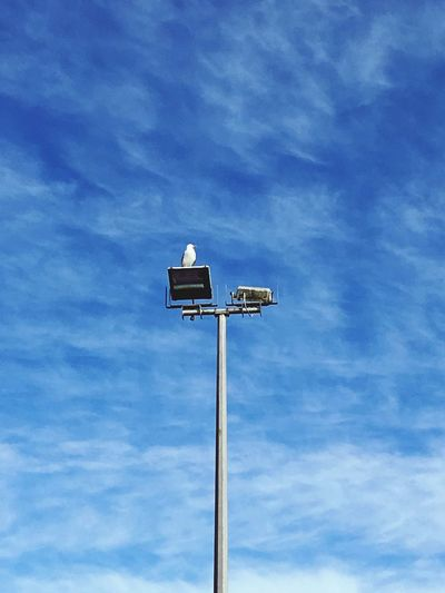 EyeEm Selects Low Angle View Cloud - Sky Sky Day Blue Technology No People Floodlight Outdoors Nature Clouds And Sky Clouds Summer Summertime Seagull Blue Sky Sky And Clouds