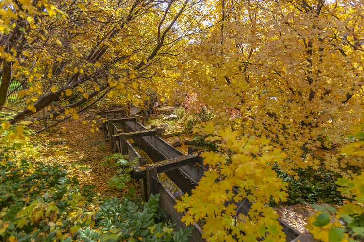 Yellow flowering tree in park during autumn
