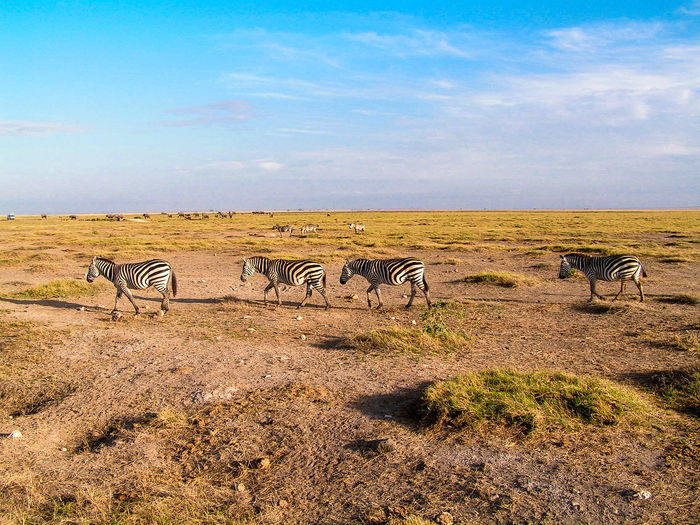 Africa Animal Animal Themes Animals In The Wild Day Desert Kenia Landscape Large Group Of Animals Mammal Nature Nature Outdoors Savanna Sky Togetherness Water Hole Zebra