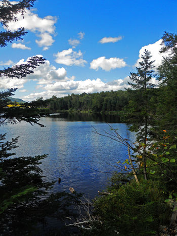 New England  New Hampshire, USA Beauty In Nature Day Forest Growth Holiday Lake Nature New Hampshire No People Outdoors Plant Saco Lake Saco River Sky Tree Water