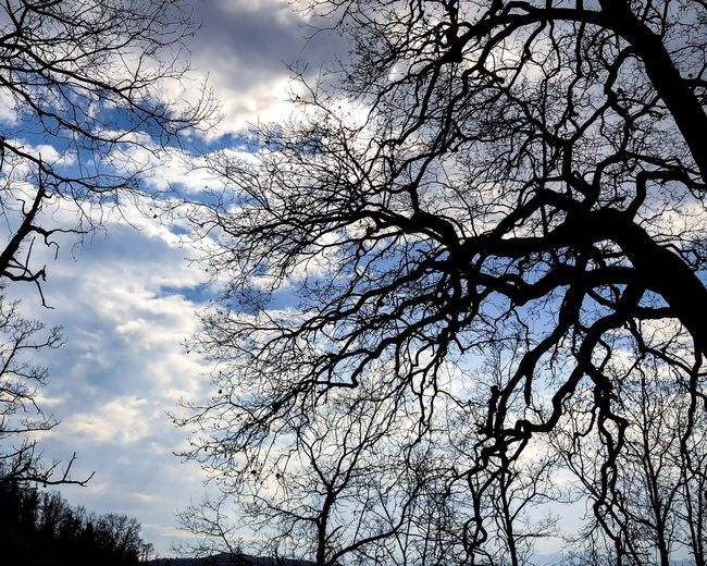 Beauty in nature...🧚🏽♂️ Winterwoods WildTree Intothewoods Bluesky Beautiful Nature Silhouettes Of Trees Tree Low Angle View Branch Nature Beauty In Nature Sky Bare Tree Tranquility Silhouette