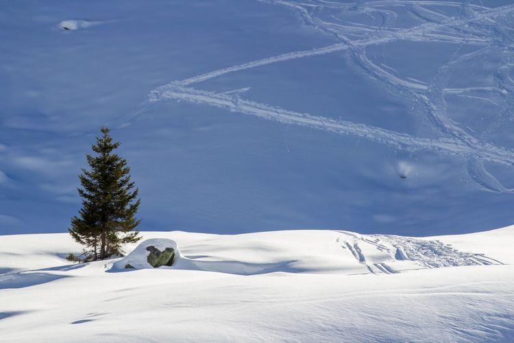 Tree on snowcapped mountain