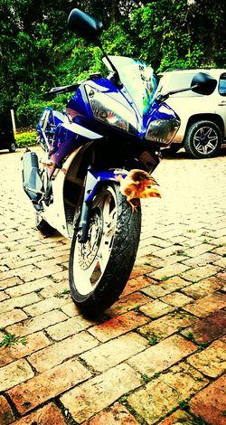 Pasion por las dos ruedas!! Yamaha Yamaha R15 Motorcycle Atrapasueños