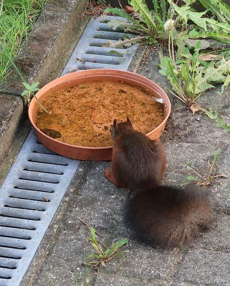 Eichhörnchen Squirrel High Angle View Day Nature Plant No People Animal Animal Themes One Animal Growth Outdoors Front Or Back Yard Mammal Animal Wildlife Sunlight Animals In The Wild Potted Plant Pets Vertebrate Field Land