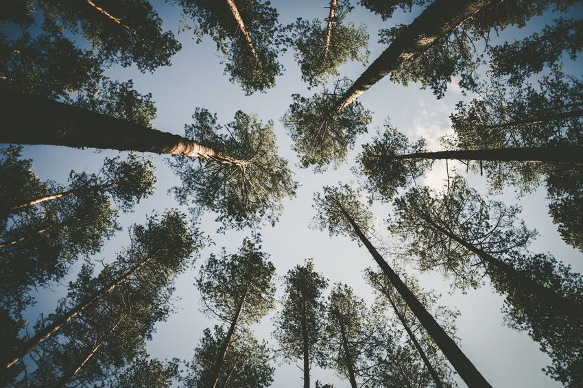 The Great Outdoors - 2017 EyeEm Awards Tree Low Angle View Nature Tree Trunk Forest Growth Directly Below Beauty In Nature No People Sky Outdoors Tranquility Day Green Color Scenics Branch Tree Area