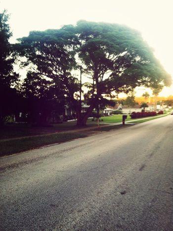 Road Tree Random(: EyeEm Nature Lover