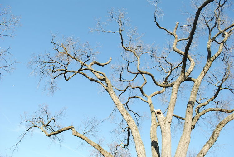 Bare Tree Beauty In Nature Blue Branch Day Dried Plant Focus On Foreground Growth Low Angle View Nature No People Outdoors Scenics Sky Sky_collection Tranquil Scene Tranquility Tree Twig