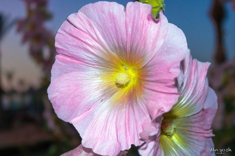 Flower Flowering Plant Freshness Petal Plant Fragility Vulnerability