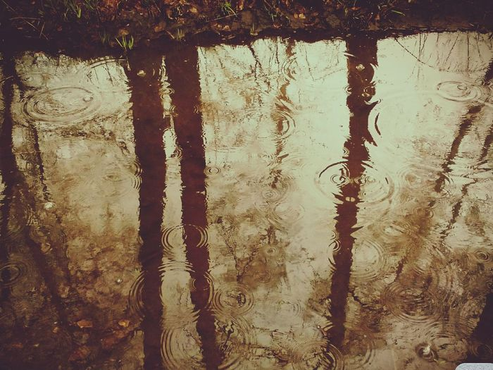 Rainy Day Trees Novosibirsk