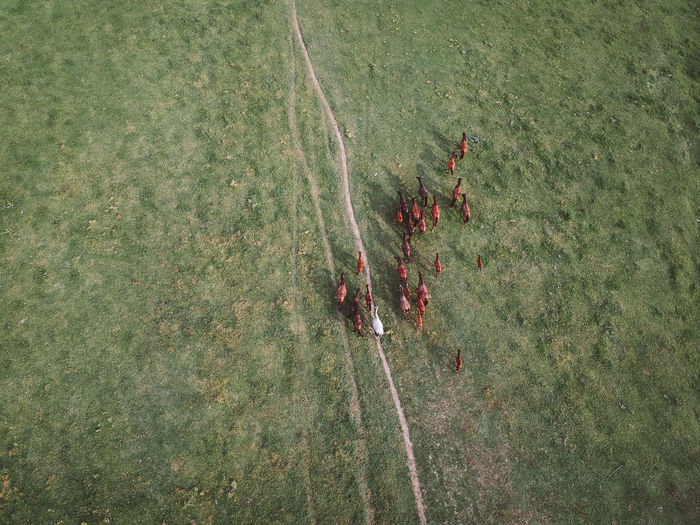 Horses Nature Aerial View Day Directly Above Environment Field Grass Green Color High Angle View Land Landscape Outdoors