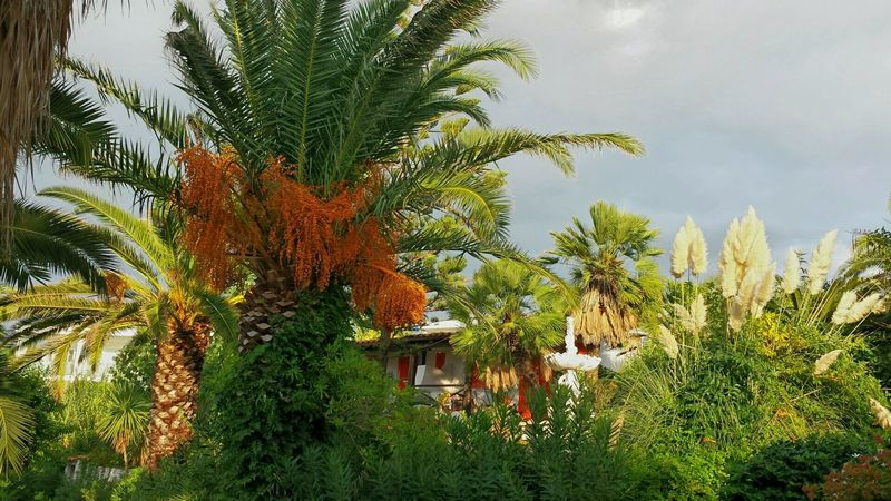 Ladyphotographerofthemonth At The Hotel Hotel Garden Mediterranean Nature Subtropical Botanical Garden Subtropical Palm Trees Green Green Green!  Bungalow Giant Reed Colourful Nature Sub Tropical Climate Hotel Life Flowers,Plants & Garden Beliebte Fotos Calabria (Italy) Cloudy Sky Just Before The Rain Showcase: November Coconut Trees My Best Photo 2015