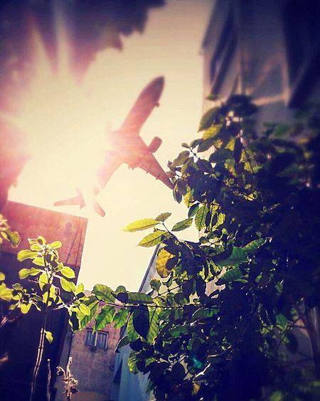 Dawn break landing. Boeing 777. Outdoors Nature Planes Boeing777 Dawn Plants Sunrays First Eyeem Photo