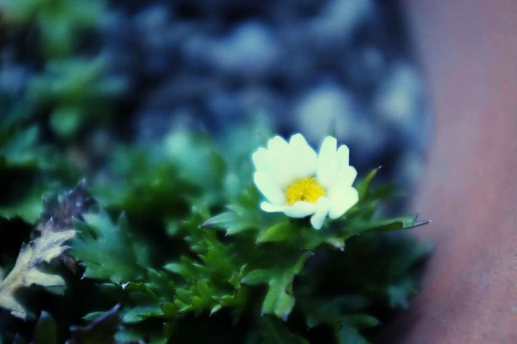 When work continues, I don't get exercise. I go to a roof in the intervals and do exercises. There was spring in a cold roof. Is the day it becomes warm near? Flower Scof75 The First Day Of The Spring 立春