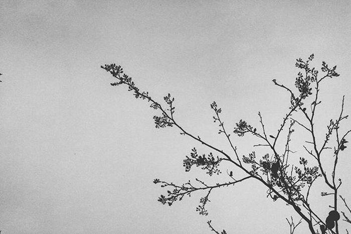 Nature is Art. Photography Instagram Instagood Instalike Instapic Doubletap India Indian VSCO Vscocam Vscophoto Canon Canonphotos Canon_photos Canonphotography Canonphoto Instacanon Canongram Vscophotos Vscophotography Tree Beautifulnature Naturephotography Photographyislifee Photographylovers blackandwhite blacknwhite