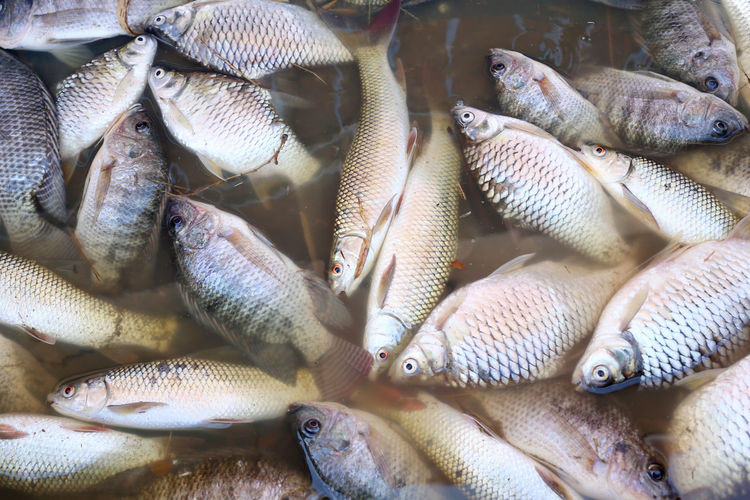 fishes died because sewage from the industrial factory. Because Fishes! Industrial Nature Animal Died Died Nature Environment Environmental Conservation Environmental Damage Fish Fisherman Fishes Fishing Outdoors Sewage Sewage Water