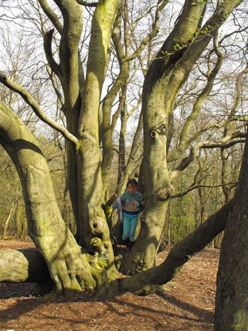 Woods on Wrekin hill Tree Plant Tree Trunk Trunk One Person Forest Nature Leisure Activity Land Day Casual Clothing Lifestyles Full Length Real People WoodLand Growth Standing Outdoors Child Girl Woods Wrekin Winter Young Girl Britain