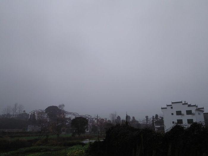 Tree Fog No
