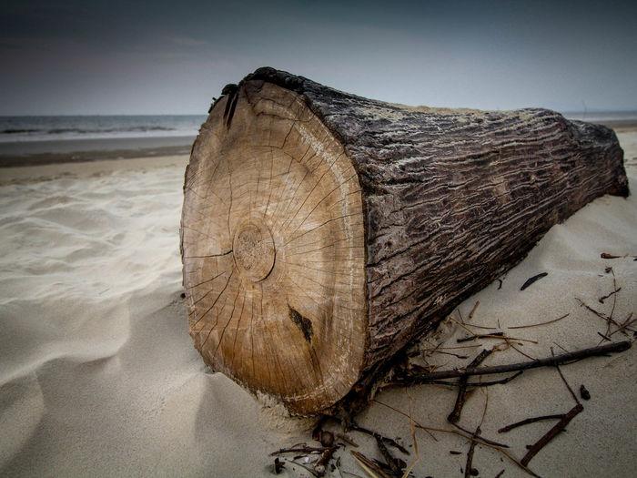 Close-Up Of Tree Stump On Beach