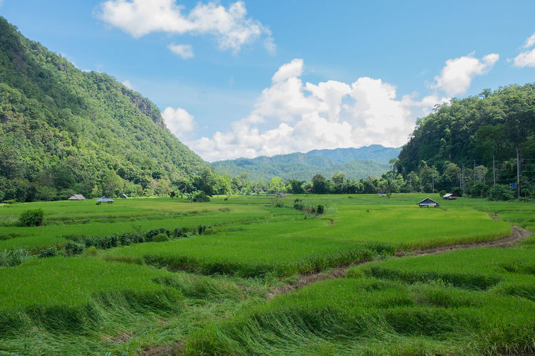 Landscape of green field and coffee mug Beautiful Perspective Agriculture Beauty In Nature Blue Sky Camps Cloud - Sky Clound Day Daylight Field Green Color Growth Landscape Mountain Nature Outdoor Outdoors Paddy Field Rural Scene Scenics Sky Tranquil Scene Tree White