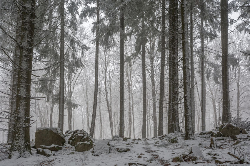 Bare Tree Beauty In Nature Cold Temperature Day Forest Landscape Natural Disaster Nature No People Outdoors Pine Woodland Scenics Snow Tranquility Tree Tree Area Tree Trunk Winter Winterwald WoodLand