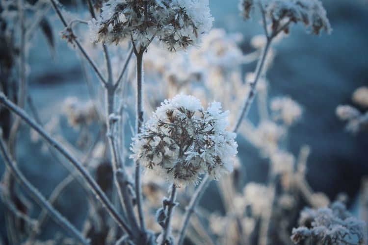 Winter Cold Temperature Nature Close-up Outdoors No People Beauty In Nature Ice Crystal EyeEm Gallery Streamzoofamily Ice Plant Scenics Natureporn EyeEm Best Shots