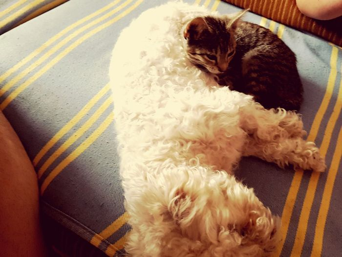 My Dog and cat is best friends :) Relaxation Domestic Animals Indoors  Pets One Animal High Angle View No People Mammal Dog Animal Themes Close-up Day