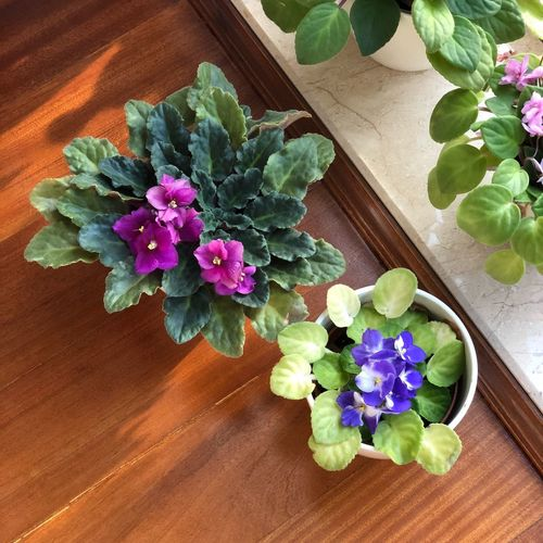 Flower Flowering Plant Plant Freshness Nature Table Beauty In Nature No People Flower Head Vulnerability  Leaf Fragility Flower Arrangement Indoors  Green Color Close-up High Angle View Purple