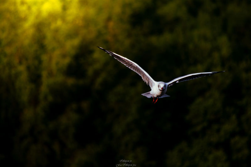 Flying Animals In The Wild One Animal Animal Wildlife Animal Themes Bird Animal Vertebrate Spread Wings Mid-air Focus On Foreground Tree Beauty In Nature No People Nature Motion Day Outdoors Plant Full Length