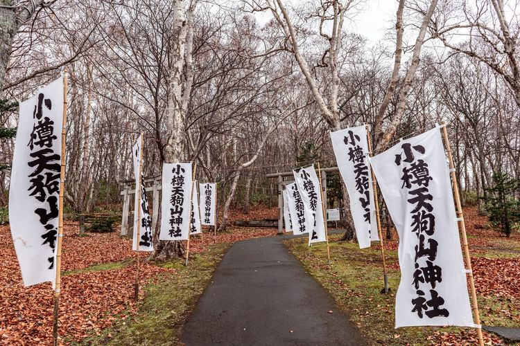 Text on road against bare trees
