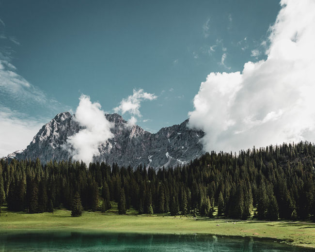 Panoramic shot of trees and mountain against sky